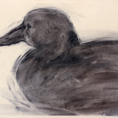 Kaave2, charcoal, 50x62cm, 2012