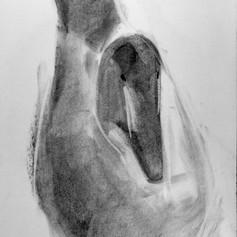 Kaave/haahka, hiili, 38x27cm, 2012
