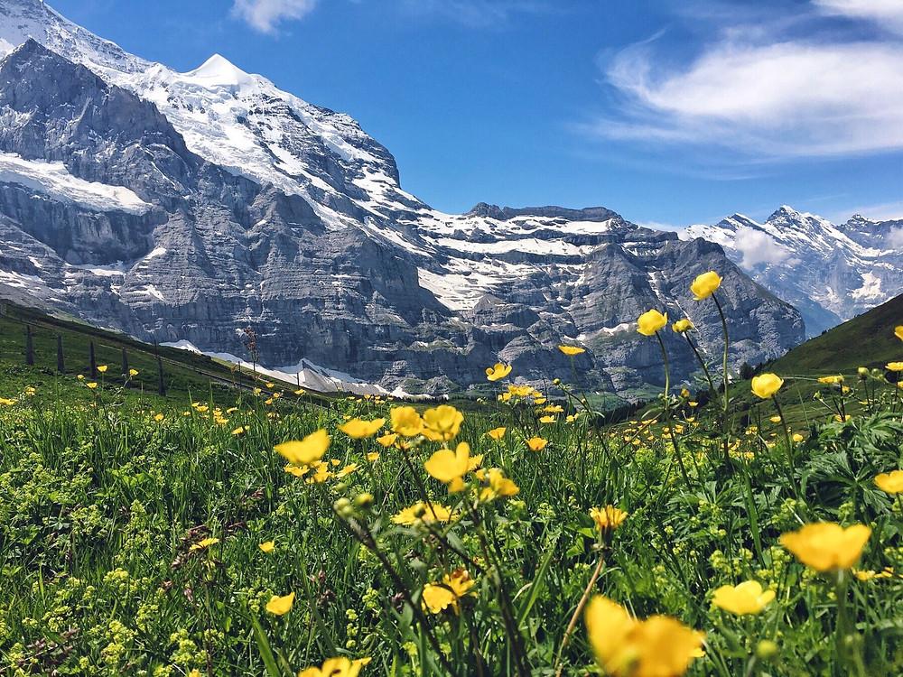 View of mountains and flowers at Kleine Scheidegg