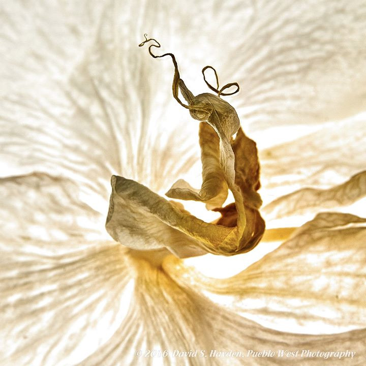 Dried Orchid.jpg