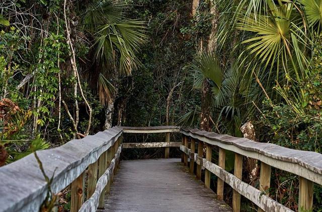 Everglades..jpg