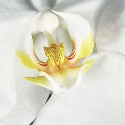 Inner Orchid_May 27 2017 121.jpg