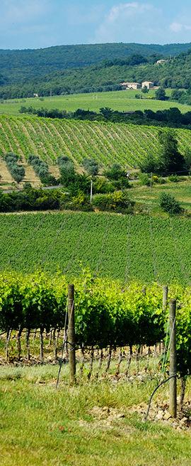 vertical_banner_piemonte.jpg