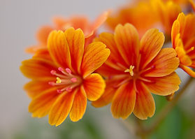 Canva - Bright Orange Flowers.jpg
