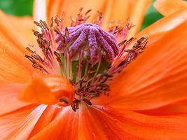 Canva - Closeup of a Flower.jpg