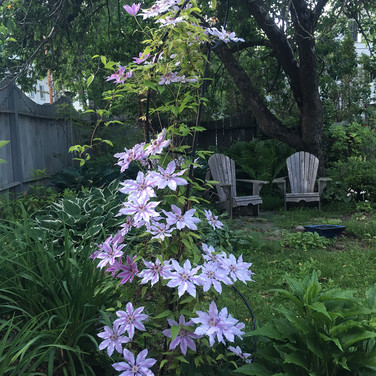 Shade Garden with Clematis