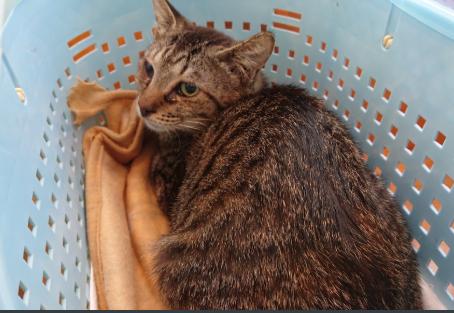 島猫命守り隊 活動報告と最近の出来事