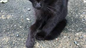 【活動報告】相島で保護した骨折猫ちゃん&風邪引き猫ちゃん