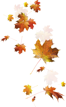 trzcacak.rs-fall-leaves-falling-png-7953