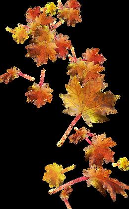 trzcacak.rs-fall-leaves-falling-png-7953