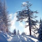 Winterlandschaft_2x.jpeg