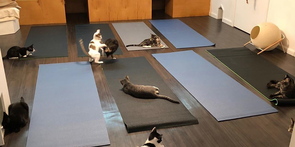Yoga & Kitties