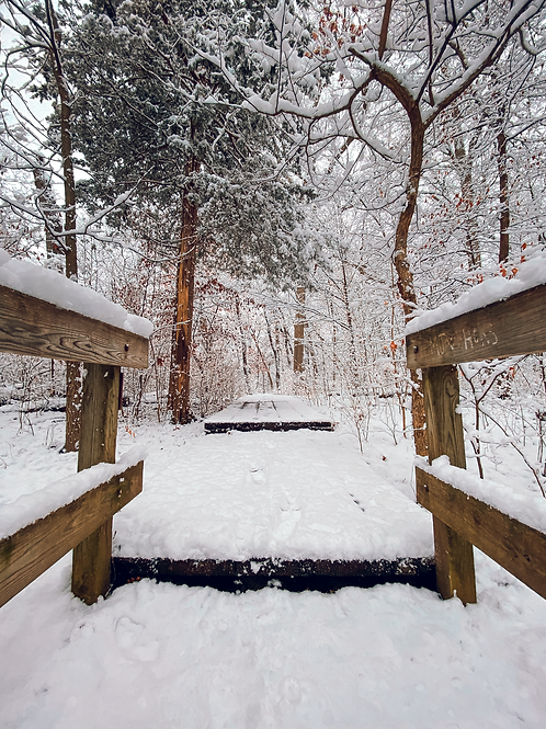 Winter Magic - Standout