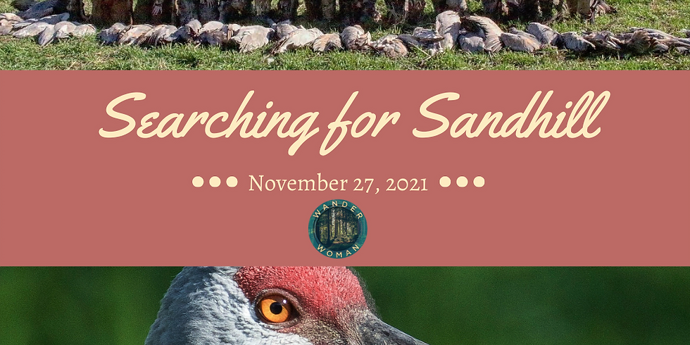 Searching for Sandhill