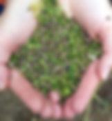 handful hemp seeds.jpg