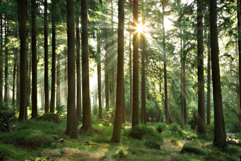 vacker skogsbild