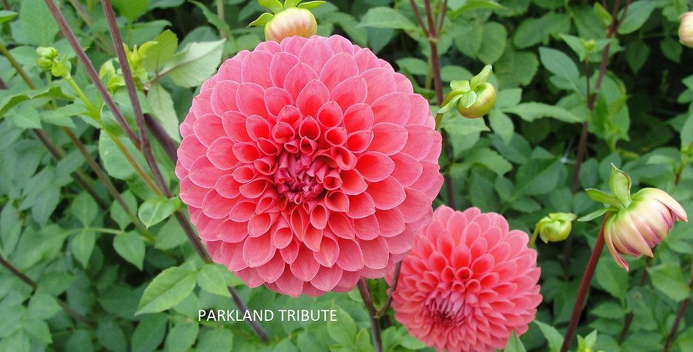 Parkland Tribute