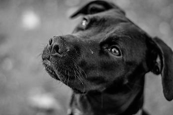 brindle and twine pet photography.jpg