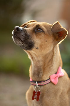 foster dog.jpg