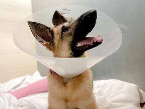 veterinary patient in cone.jpg