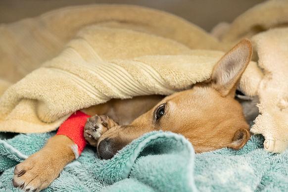 veterinary patient.jpg