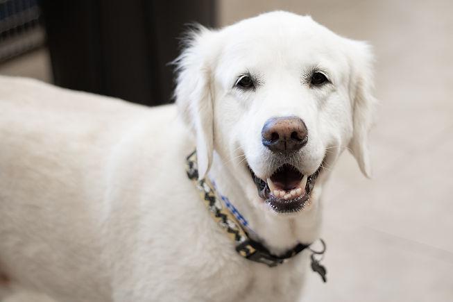 canine veterinary patient.jpg
