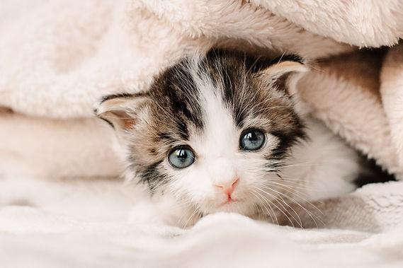 foster kitten photography.jpg