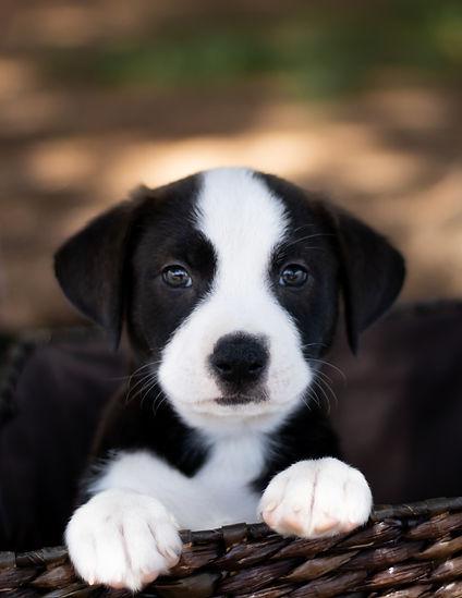 rescue puppy portrait.jpg