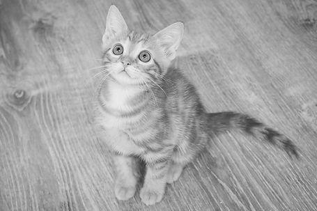 kitten portrait_edited.jpg