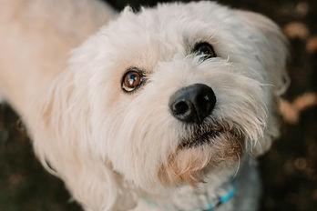 dog nose.jpg