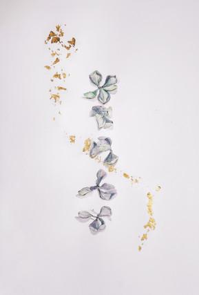 fleurs d'hortensia (hiver)