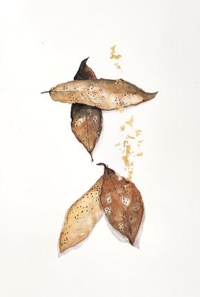 feuilles de laurier (hiver).jpg