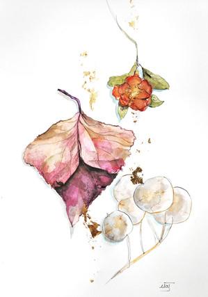 feuille et fleur séchées (hiver)