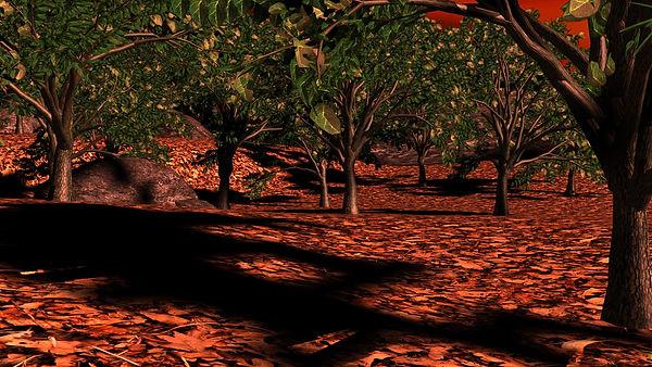 TreeBurn_001.jpg