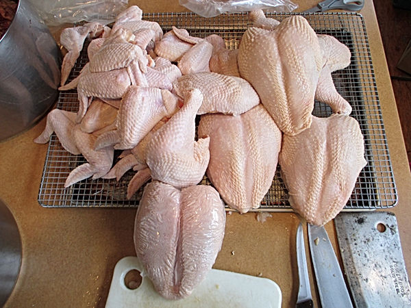 parted chickens for poultry shrink bags