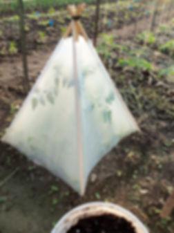 Solar Pyramid.jpg