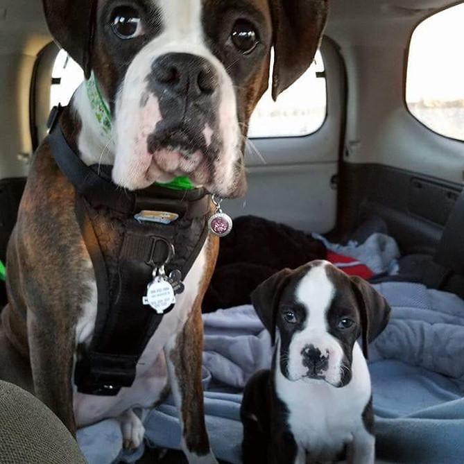 Puppy v. Rescue Dog
