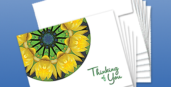 11091P: (6-Pack) Water Lilies Thinking of You, White