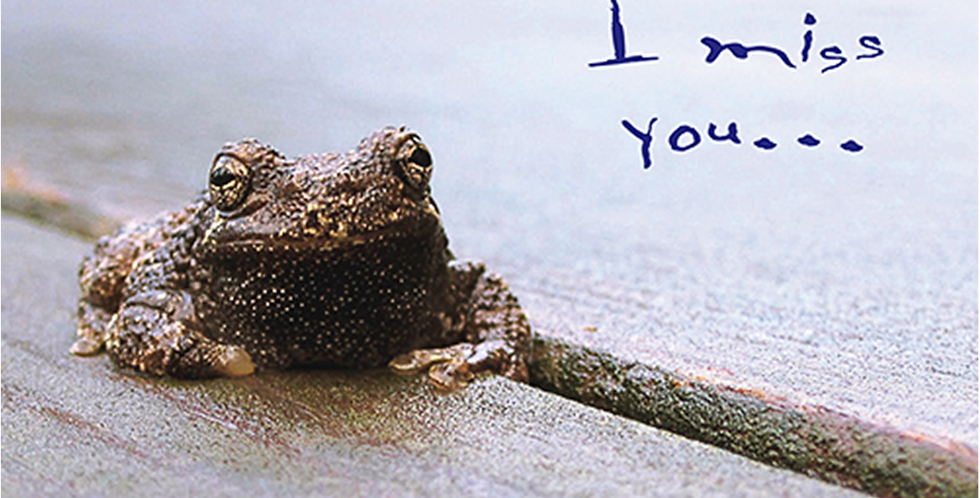11025: Toadally Miss You!