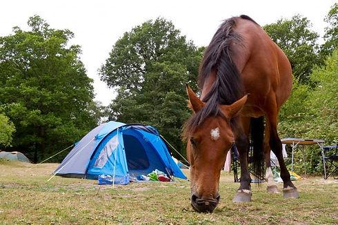 214284-676x450-Horse-Camping.jpg