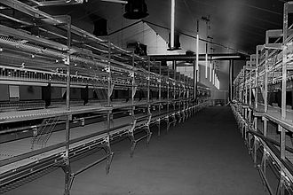 Пол для птицефабрики