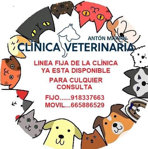 clinica-Veterinária-Anton-Martín.jpg