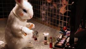 Cruelty Free (libre de crueldad animal)