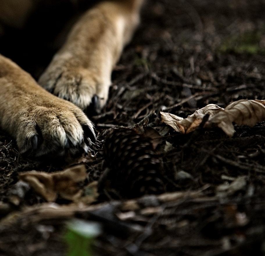 TimeCatcher Dogs (146klein).jpg