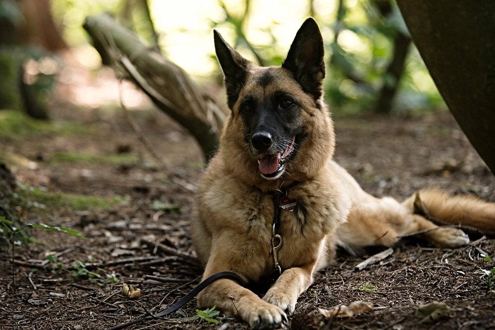 TimeCatcher Dogs (139).jpg