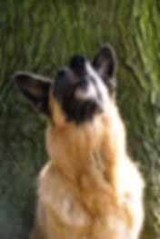 TimeCatcher Dogs (152).jpg