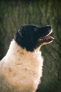 TimeCatcher Dogs (34).jpg
