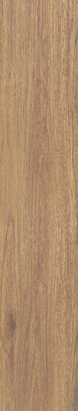 Timber Buckthorn