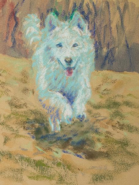 """""""Wolf Run""""(Lynne Bedbrook)"""