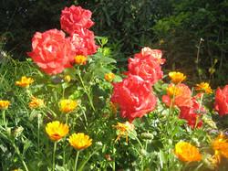 Garten 22 (9)
